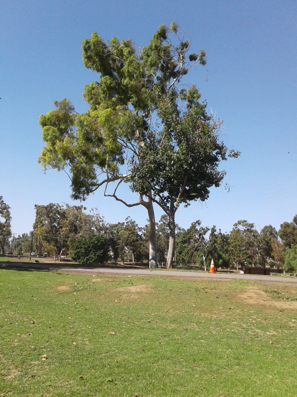 Scenery In The Park(Photography)
